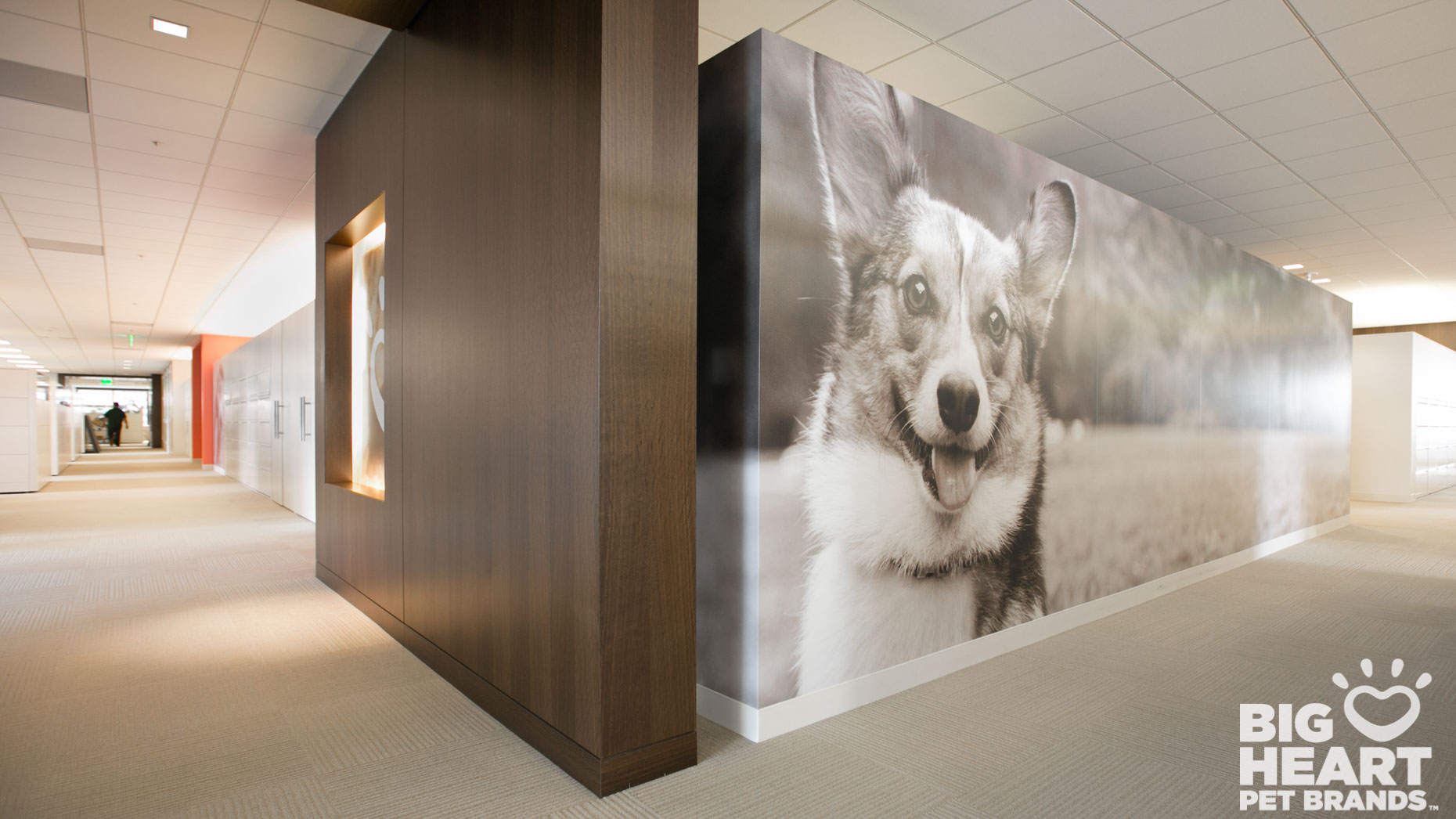 Commissioned Photography | Big Heart Corgi by Mark Rogers
