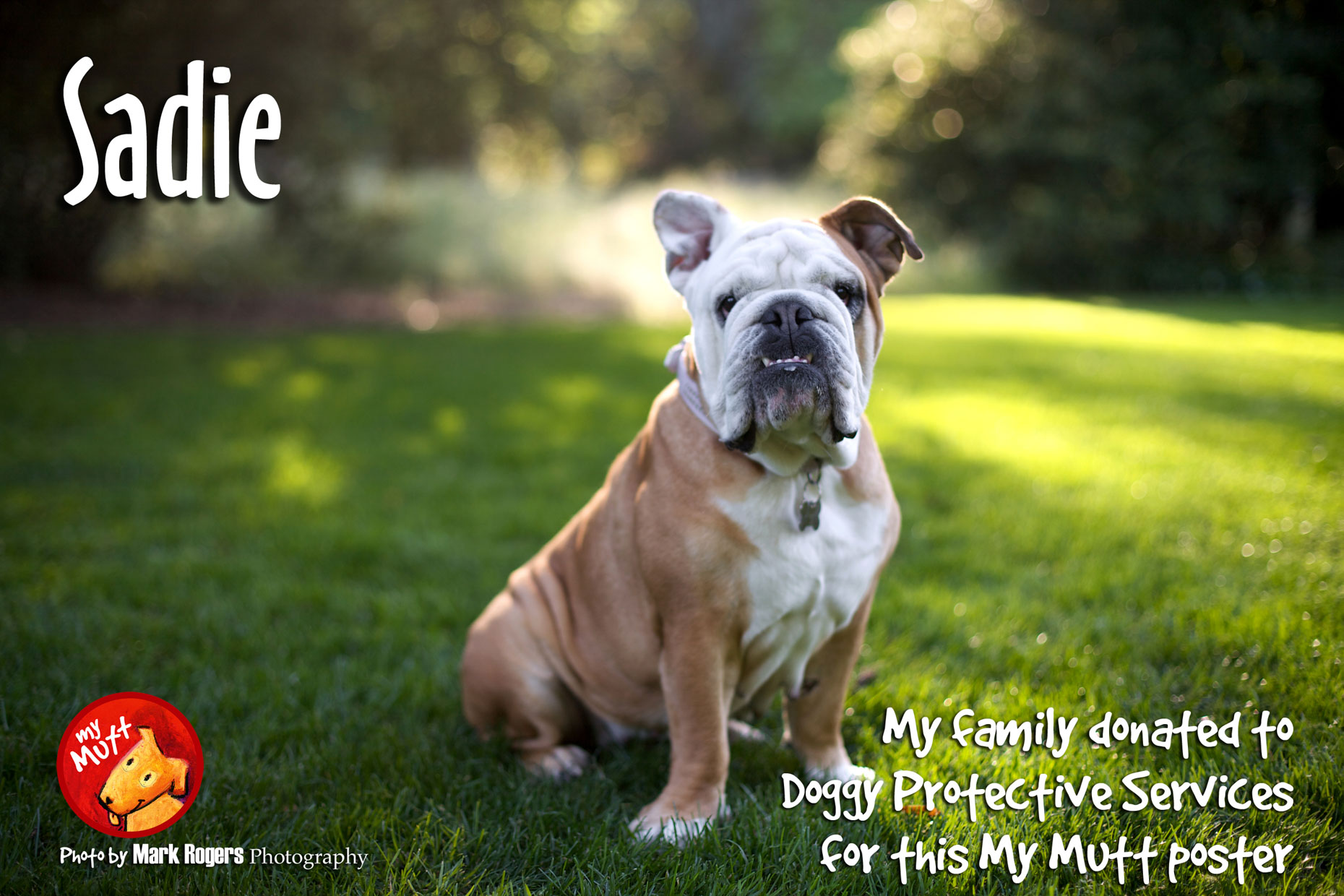 Commercial Photography | Bulldog in the Grass by Mark Rogers