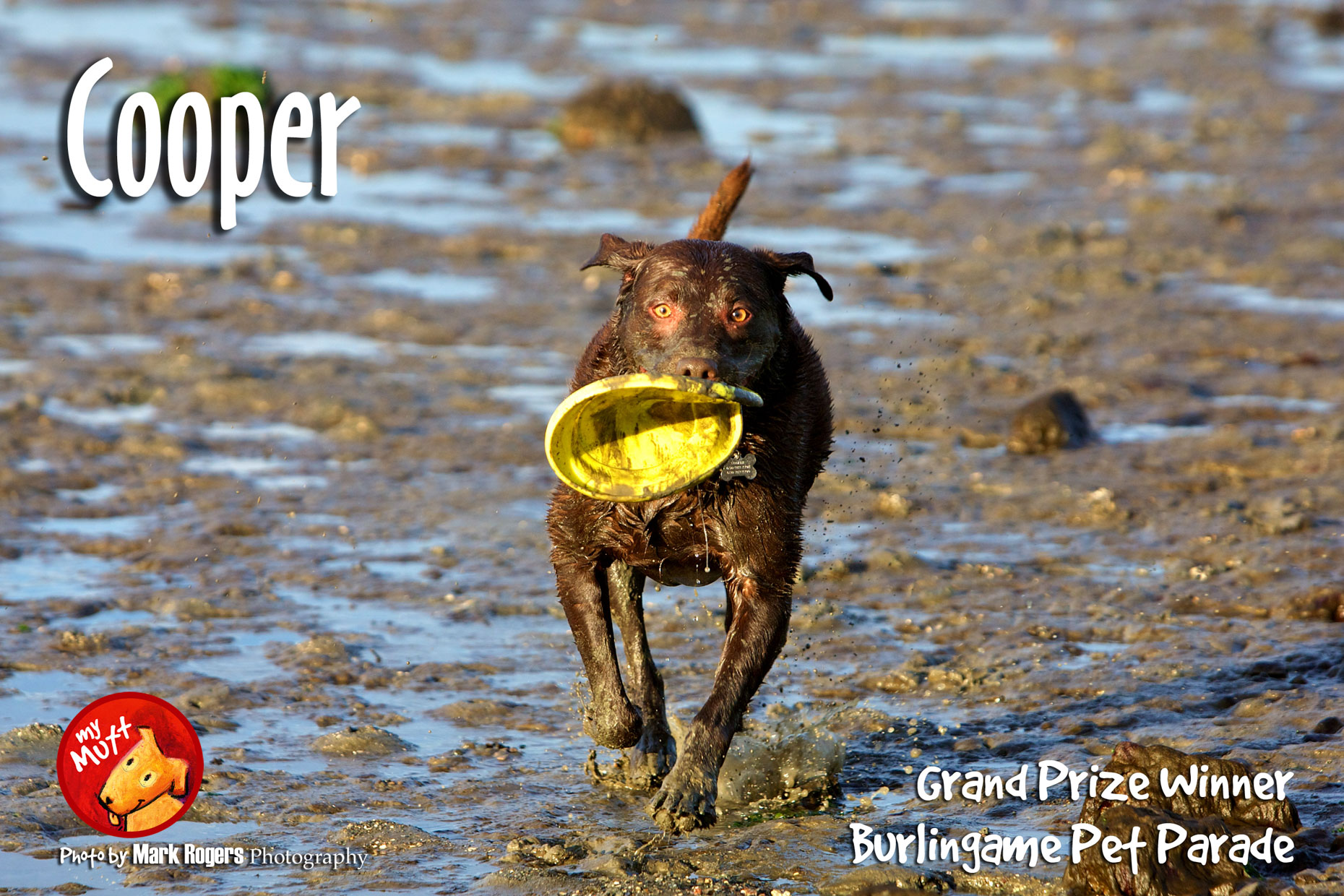 Commercial Photography | Dog in Ocean with Frisbee by Mark Rogers