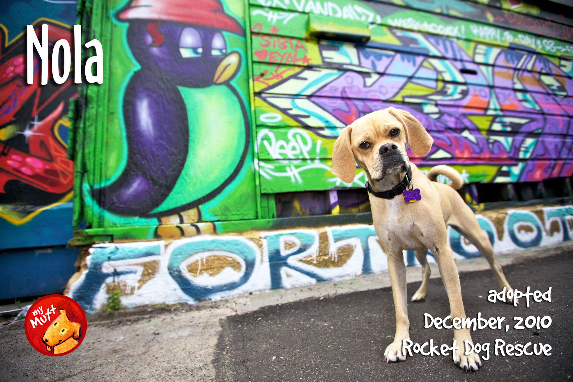 My Mutt Dog Rescue Poster | Dog by Graffiti by Mark Rogers
