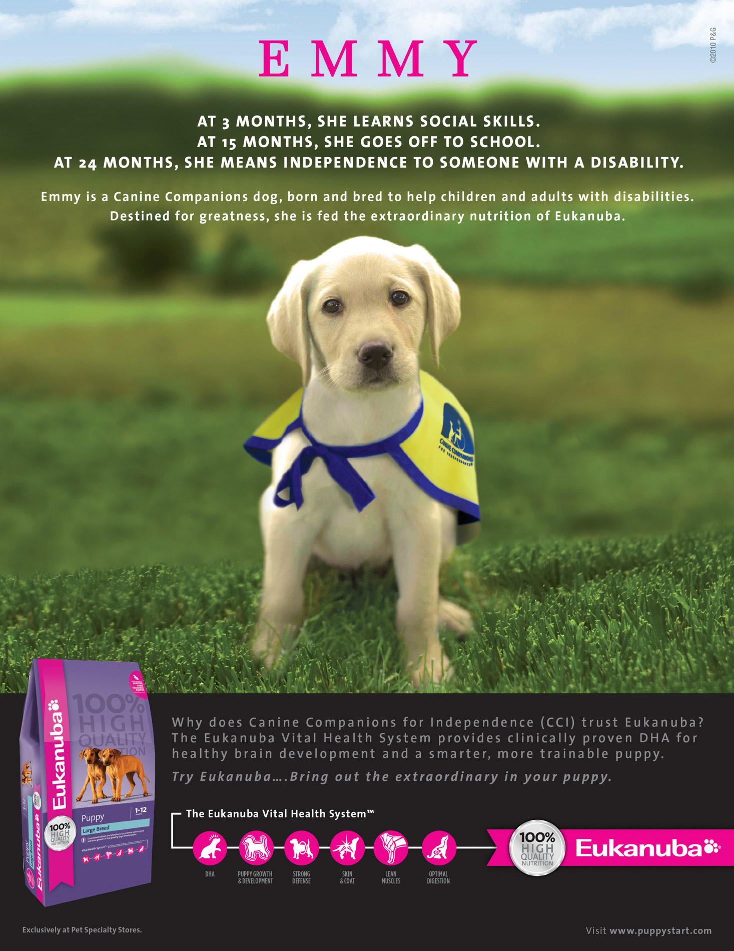 Advertising Photography | Eukanuba Puppy by Mark Rogers