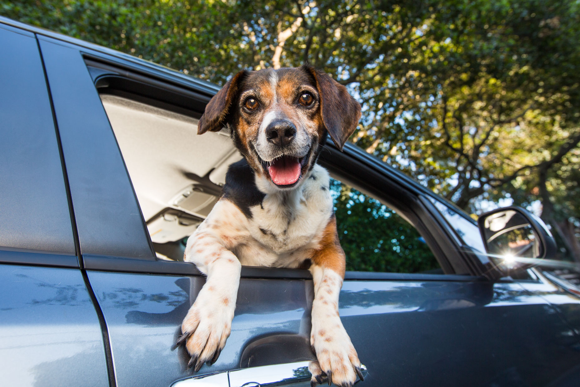 Dog Lifestyle Photography | Dog in Car Window by Mark Rogers