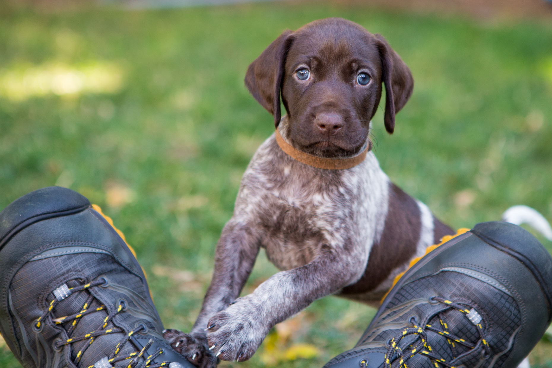 Advertising Photography | Pointer Puppy on Mans Feet by Mark Rogers