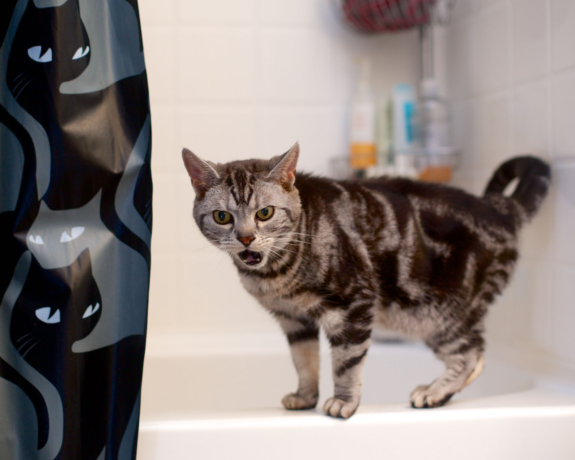 Commercial Pet Photography | Cat On Bathtub by Mark Rogers