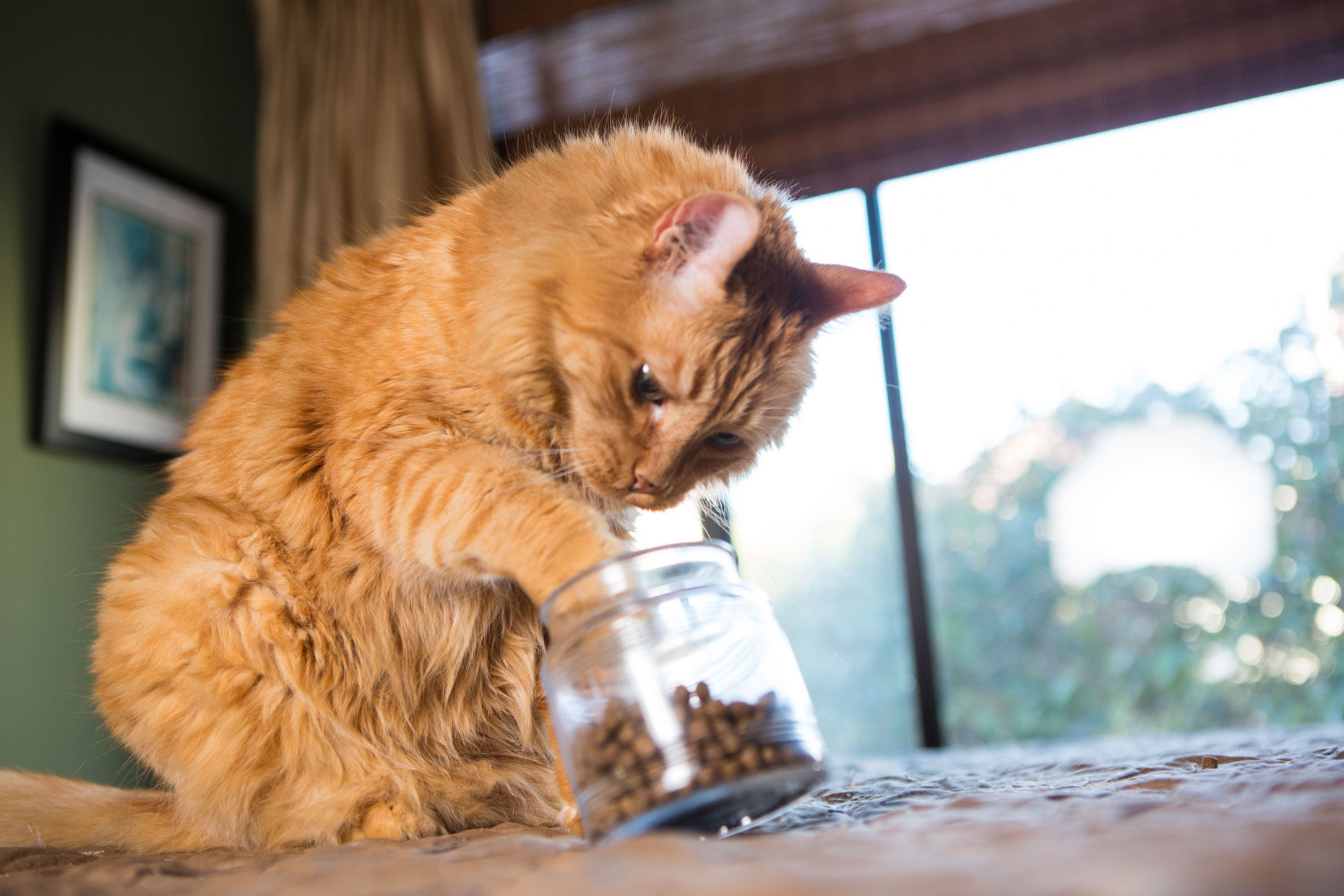 Cat Photography | Cat Reaching into Treat Jar by Mark Rogers