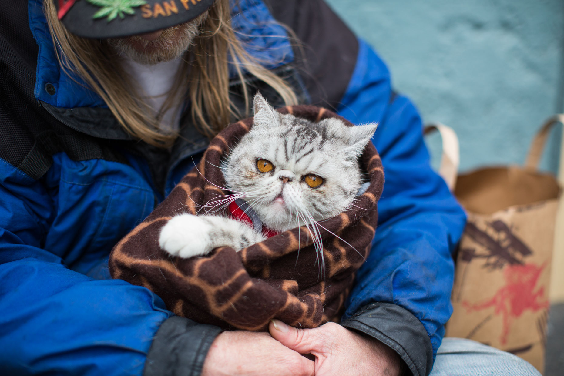 Advertising Photography | Cat Wrapped in Blanket by Mark Rogers