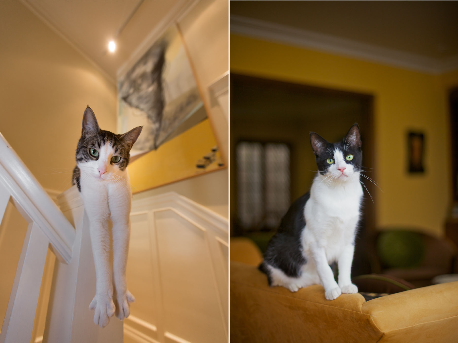 Cat Photography | Cat on Banister and on Chair by Mark Rogers