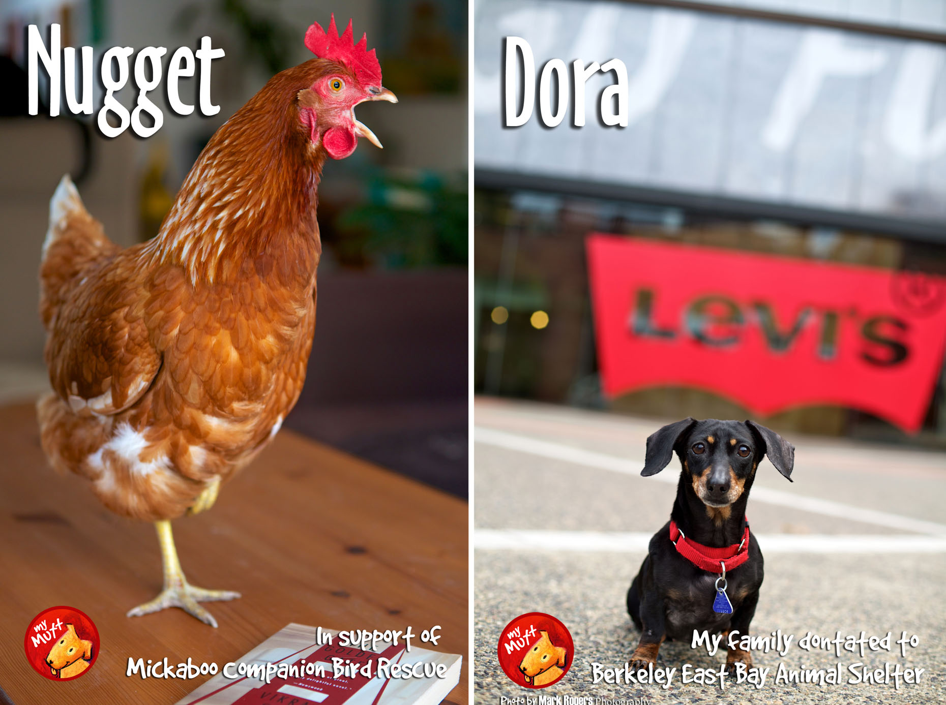 Commercial Photography | Chicken and Dog by Mark Rogers