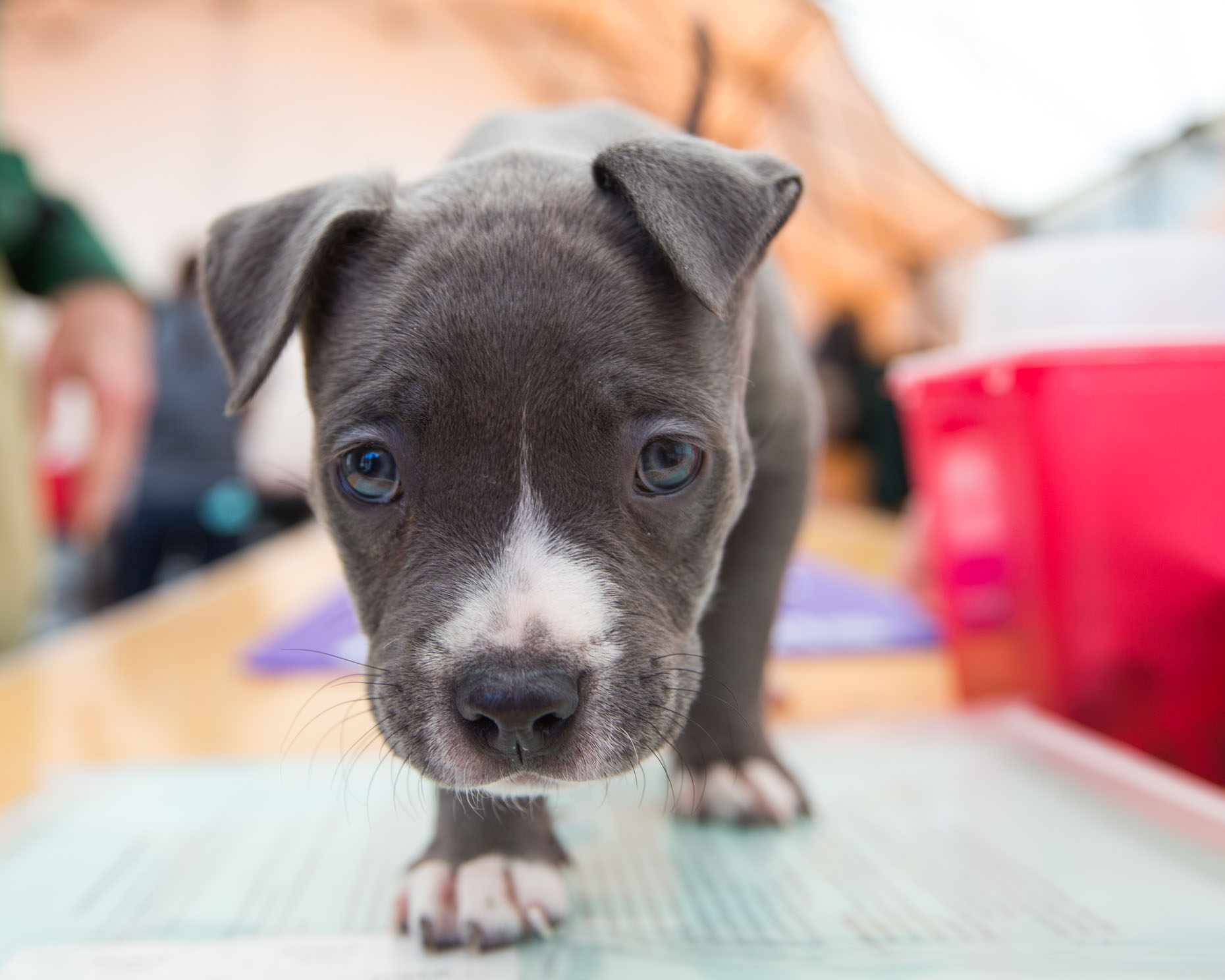 Dog Photography | Close-up of Puppy by Mark Rogers