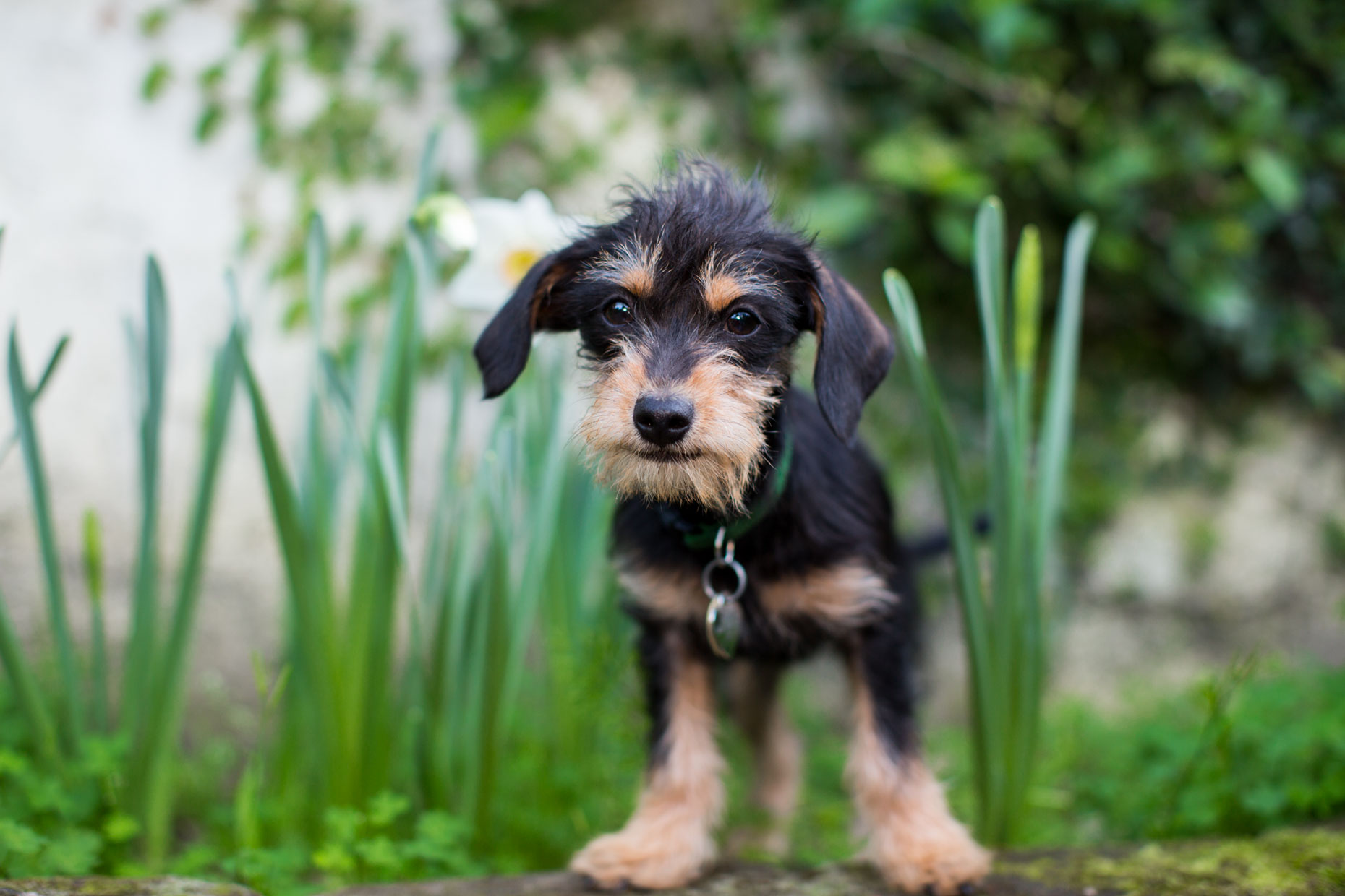 Commercial Dog Photography | Cute Puppy by Mark Rogers