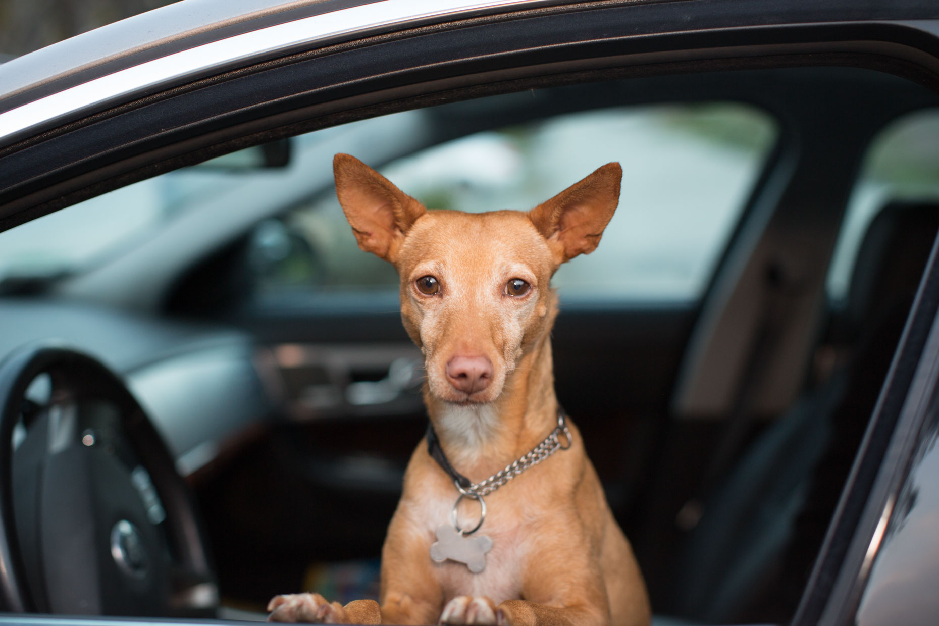 Dog Photography | Dog in Drivers Seat by Mark Rogers