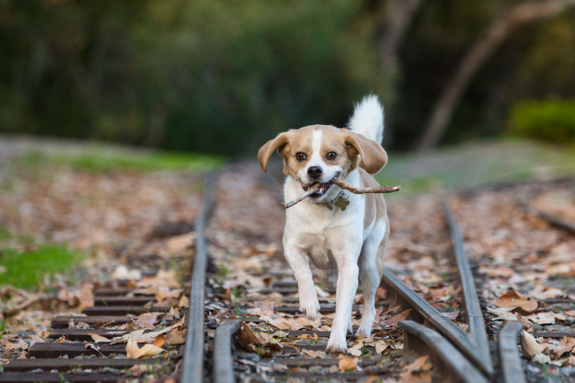 Advertising Photography | Dog with Stick by Mark Rogers