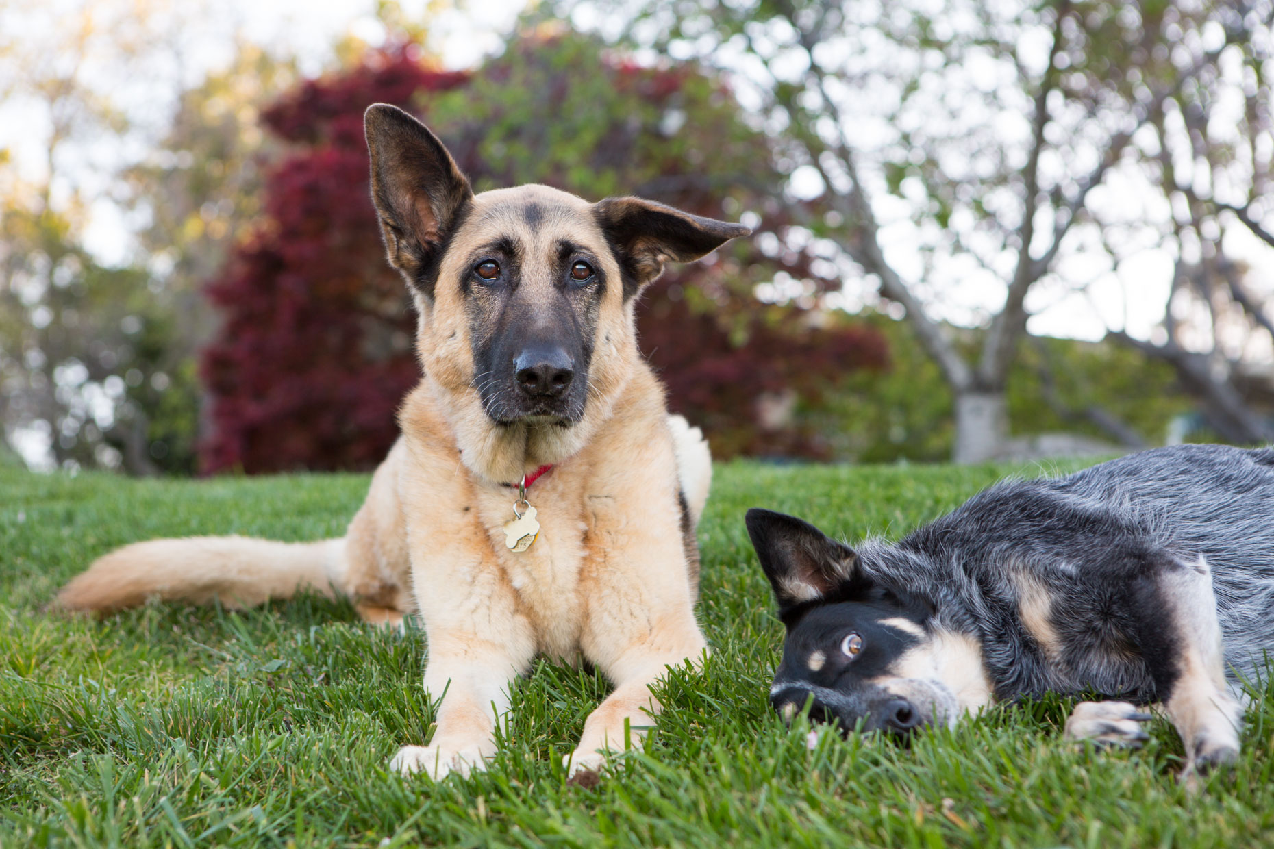 Dog and Pet Photography | Two Dogs by Mark Rogers