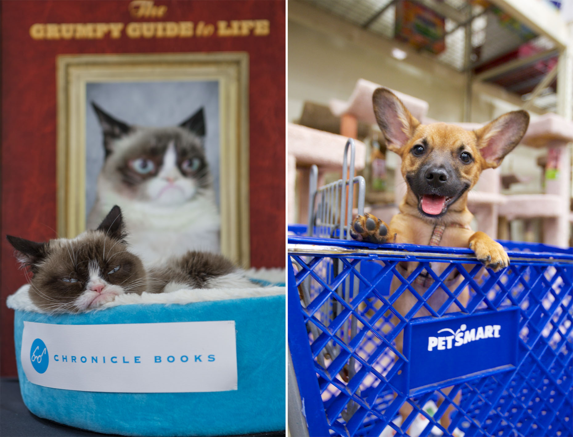 Commercial Pet Photography | Grumpy Cat and Dog in Cart by Mark Rogers