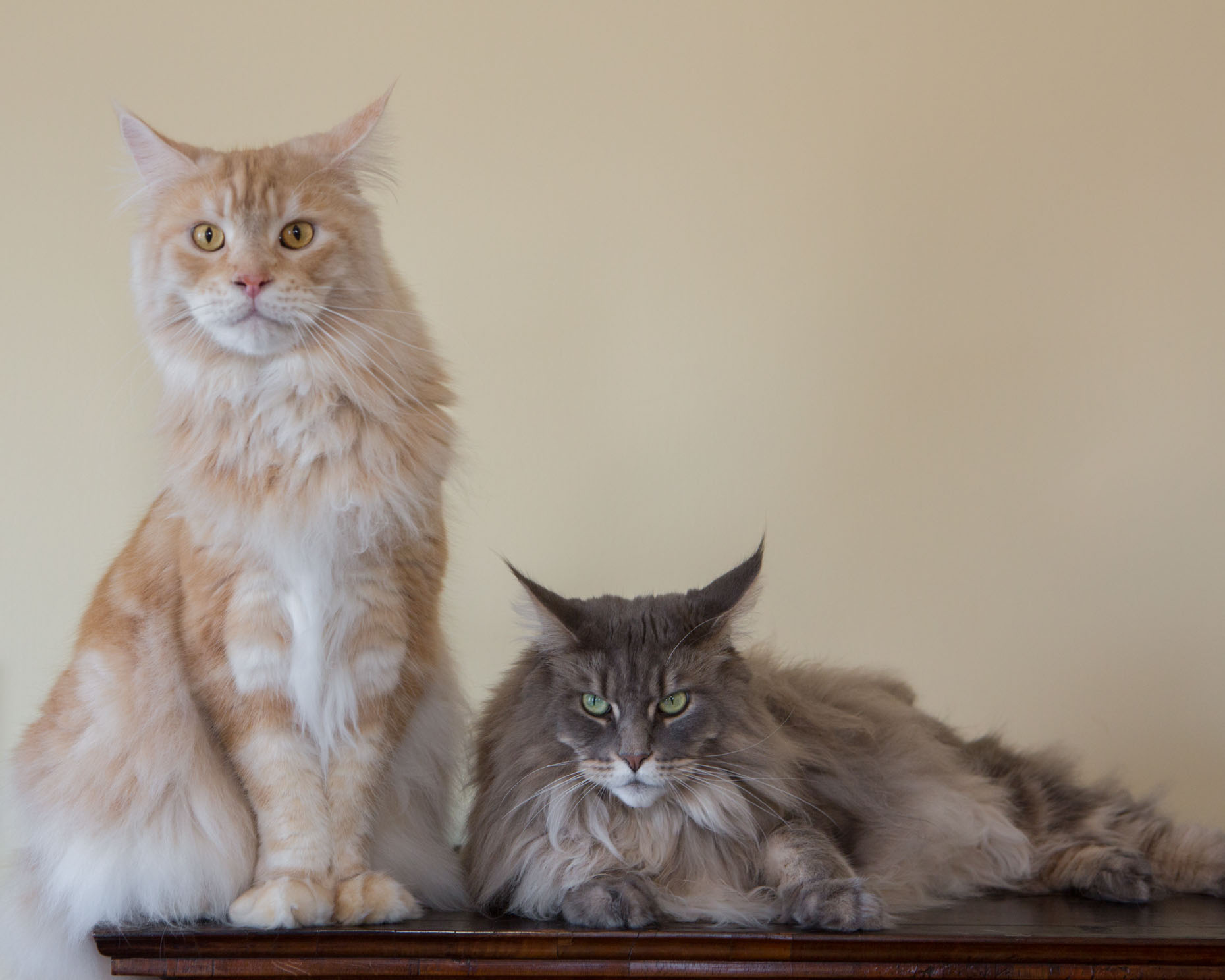 Commercial Photography | Two Cats by Mark Rogers