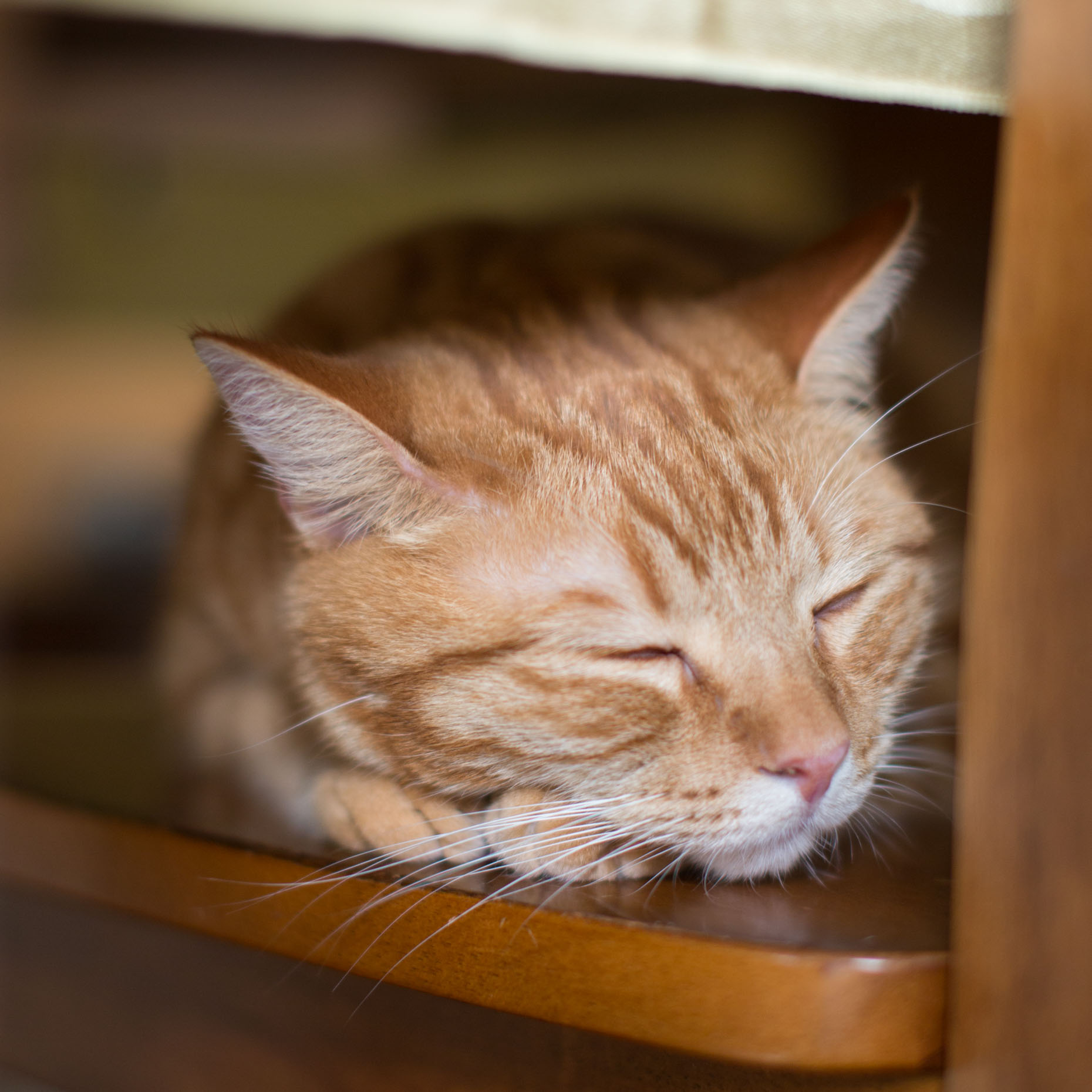 Pet Photography | Orange Cat Sleeping by Mark Rogers