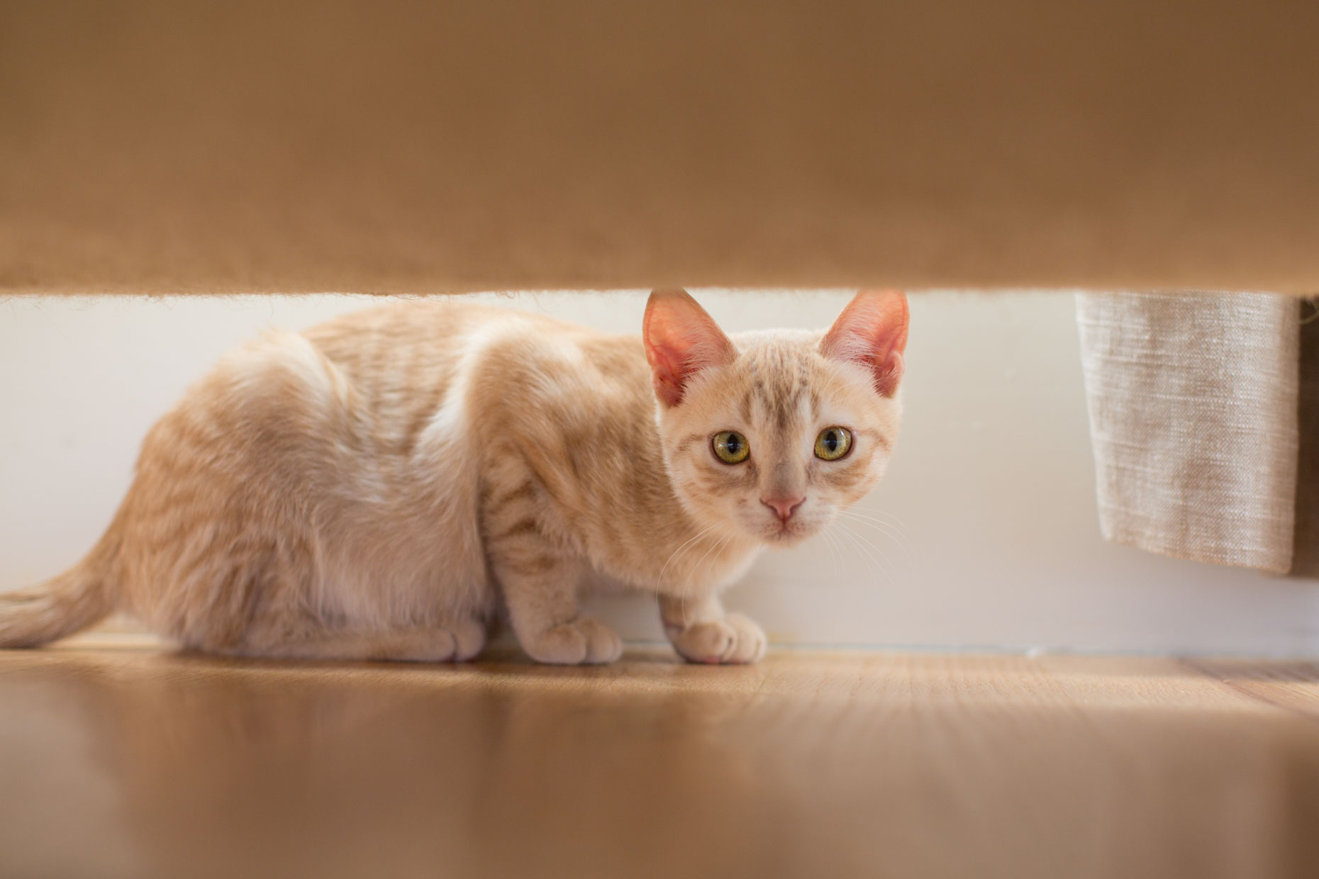 Cat and Pet Photography | Kitten Under Sofa by Mark Rogers