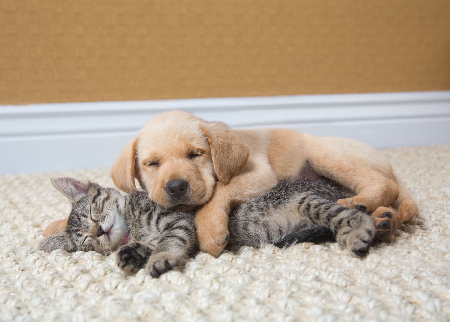 Cat and Pet Photography | Puppy and Kitten Sleeping by Mark Rogers
