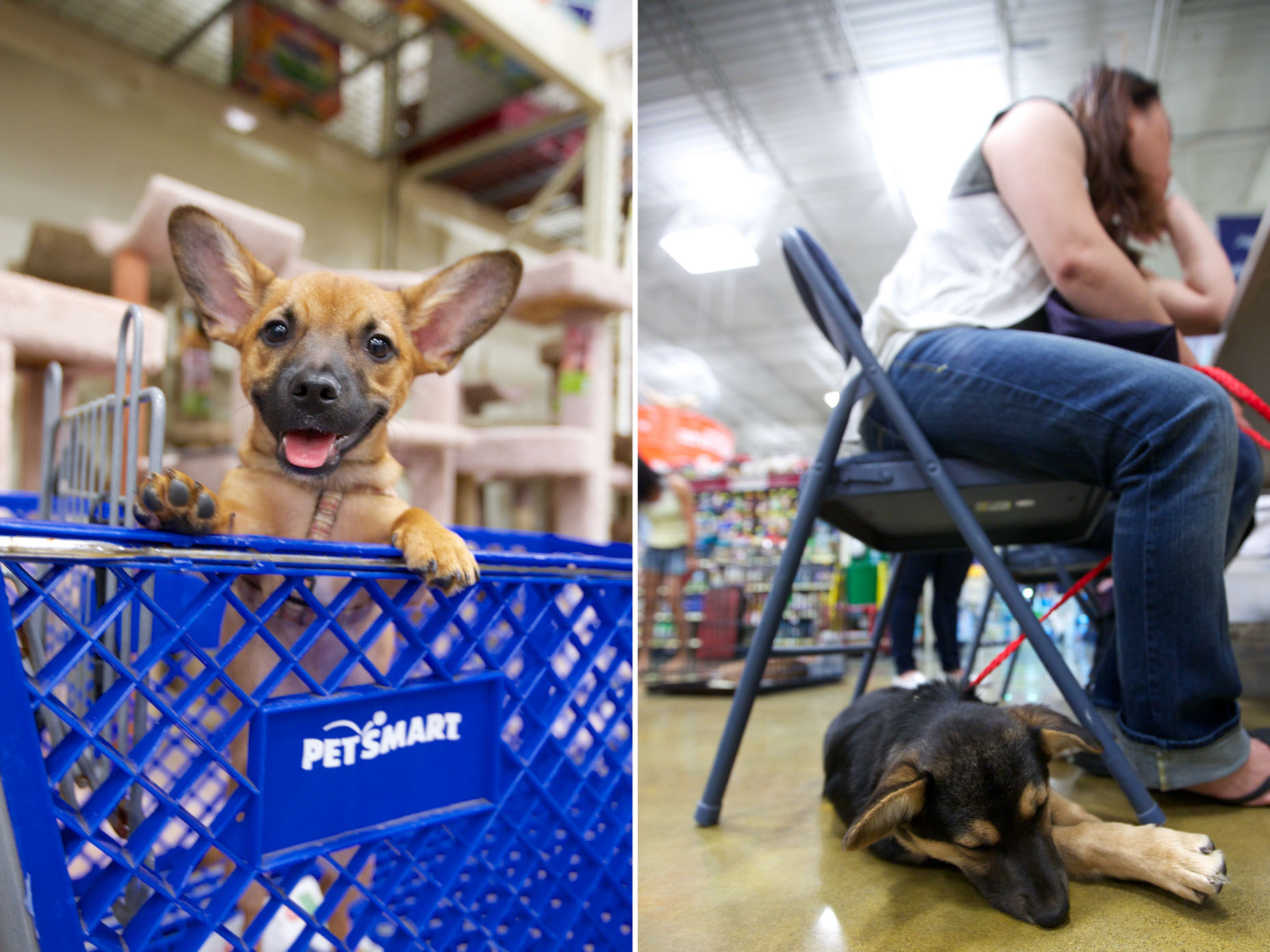 Commercial Photography | Dog in Shopping Cart and Under Chair by Mark Rogers