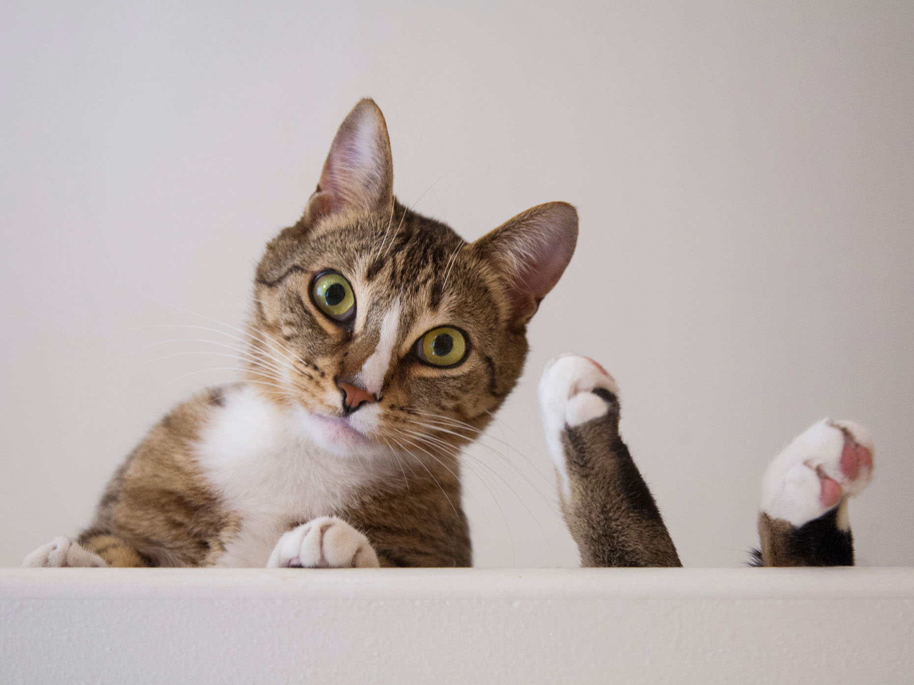 Cat Photography | Tabby Cat with Feet Up by Mark Rogers