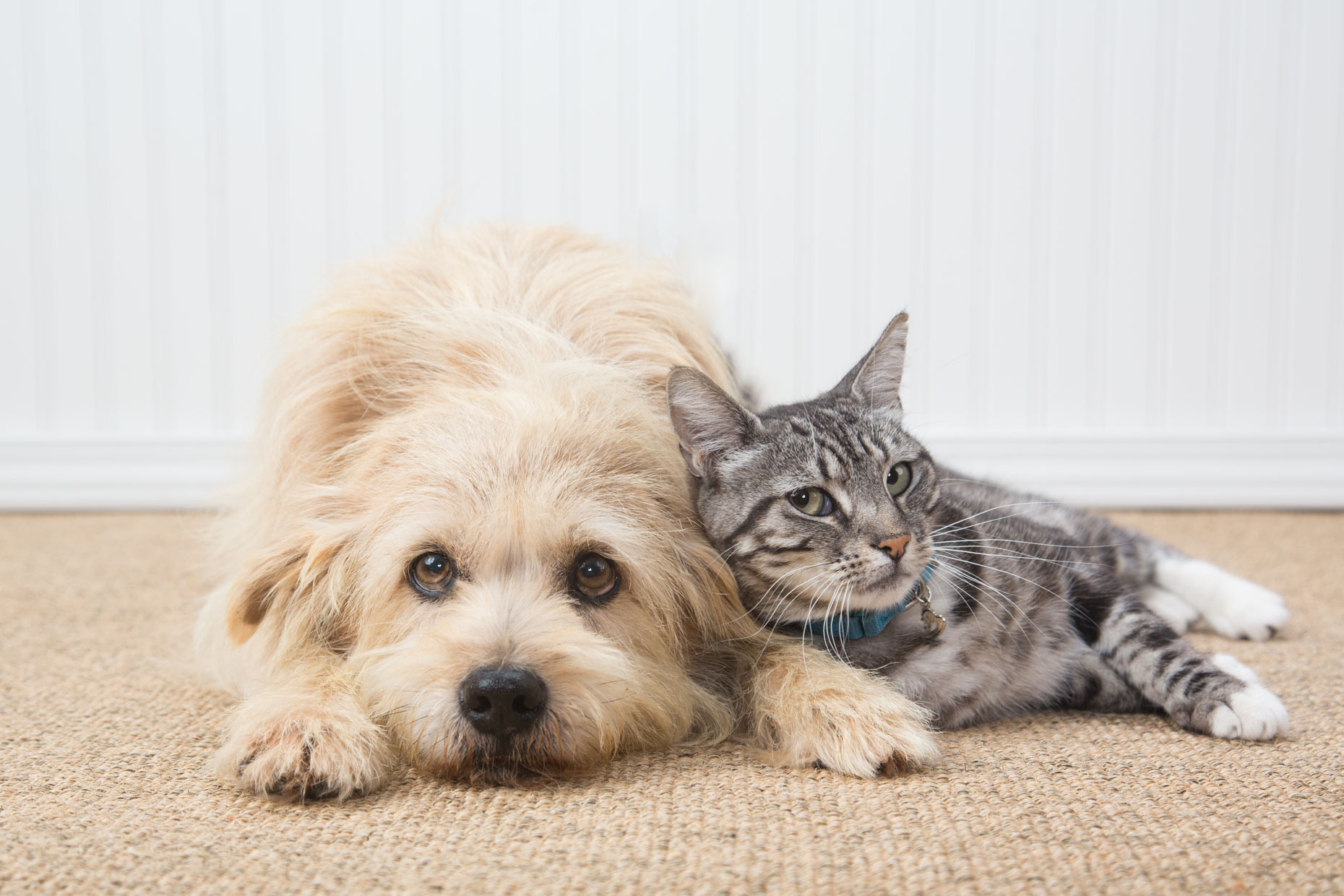 Dog and Cat Photography | Cat Leaning on Dog by Mark Rogers