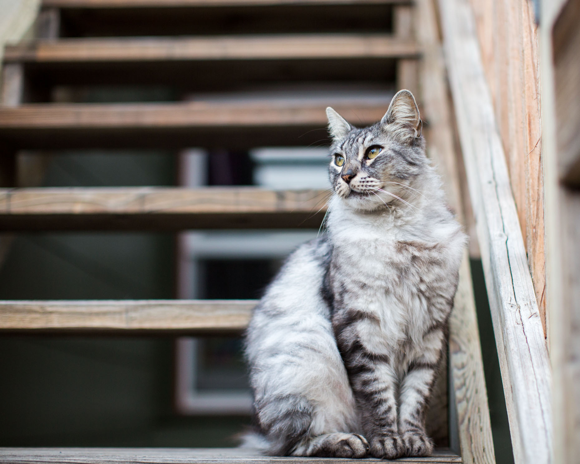 Cat and Animal Photography | Tabby Cat on Stairs by Mark Rogers