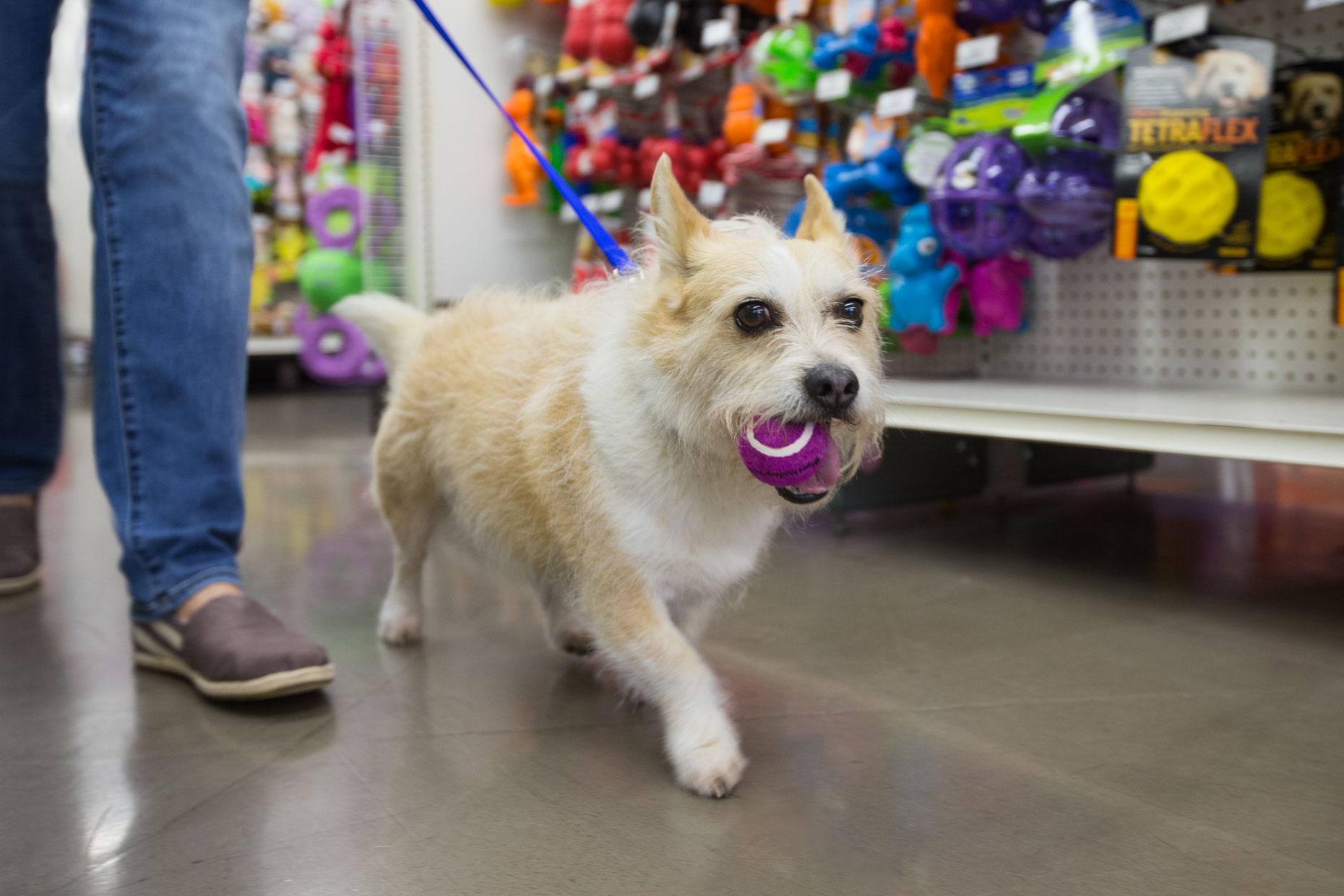 Pet Lifestyle Photography | Dog Shopping with Ball by Mark Rogers