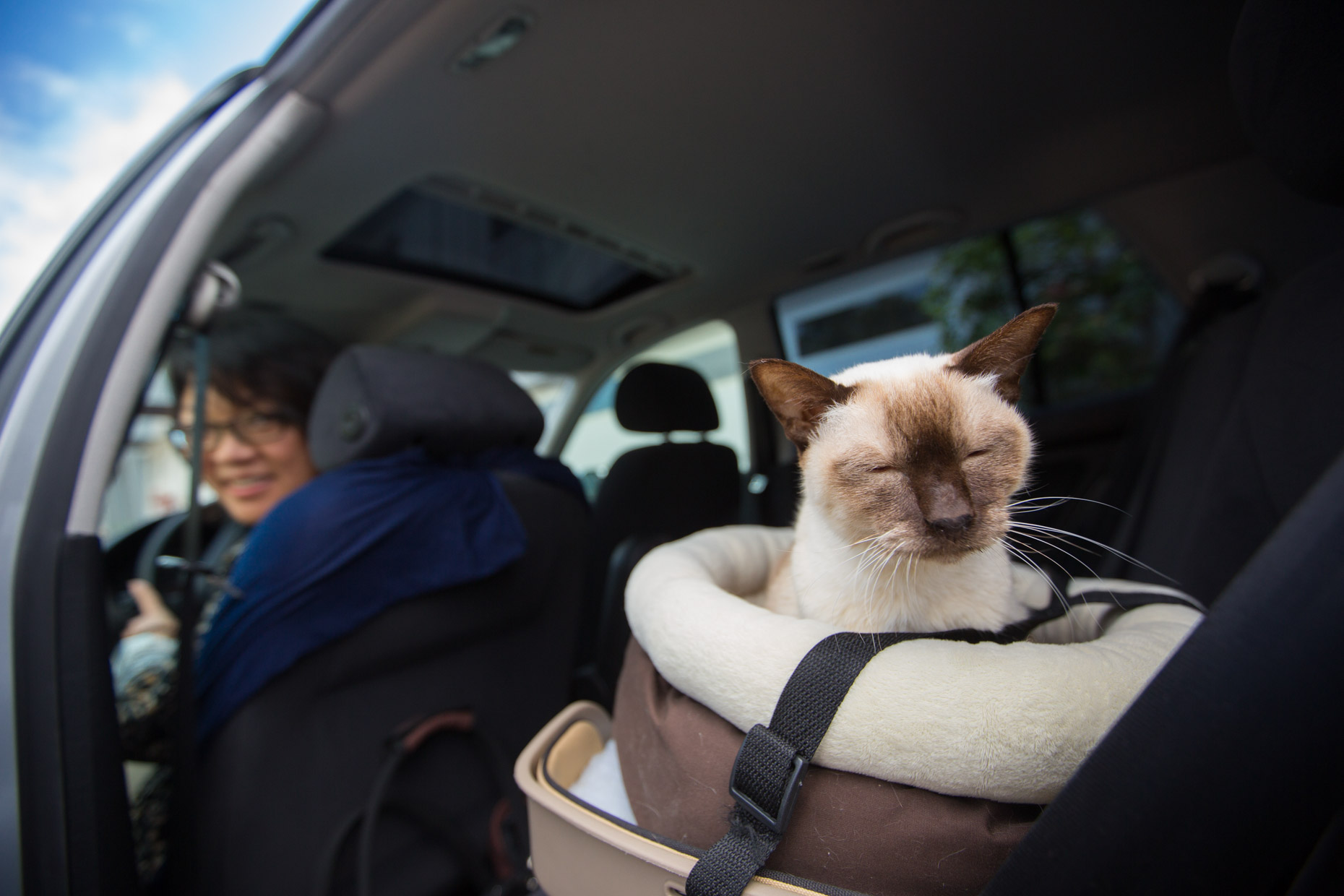 Commercial Animal Photography | Therapy Cat in Car by Mark Rogers