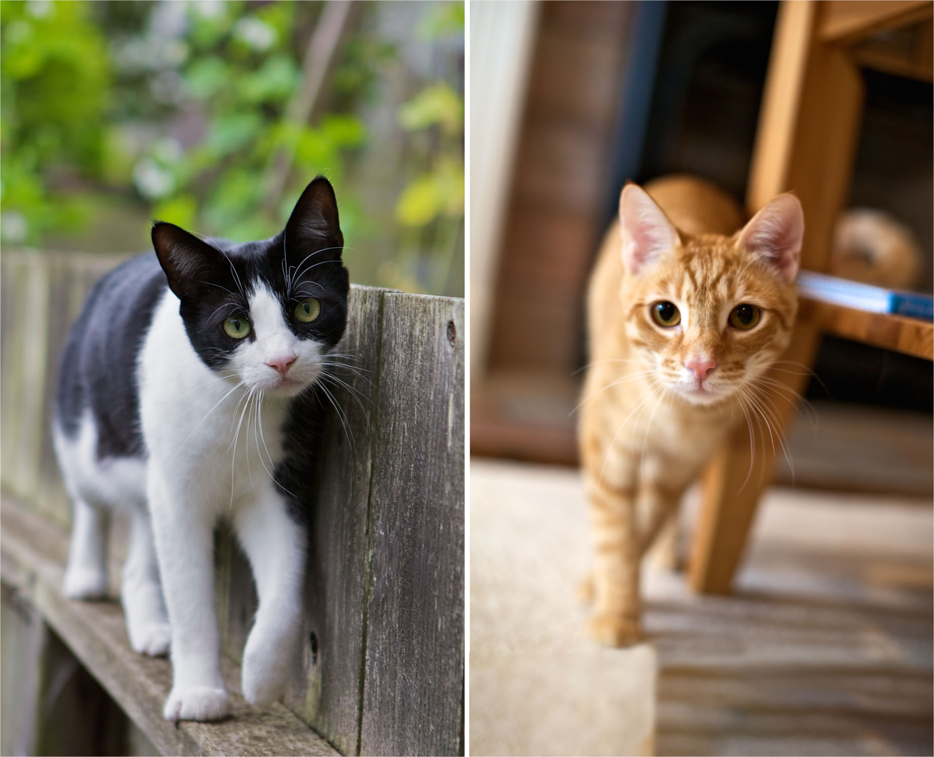 Cat Photography | Cats Walking Toward Camera by Mark Rogers