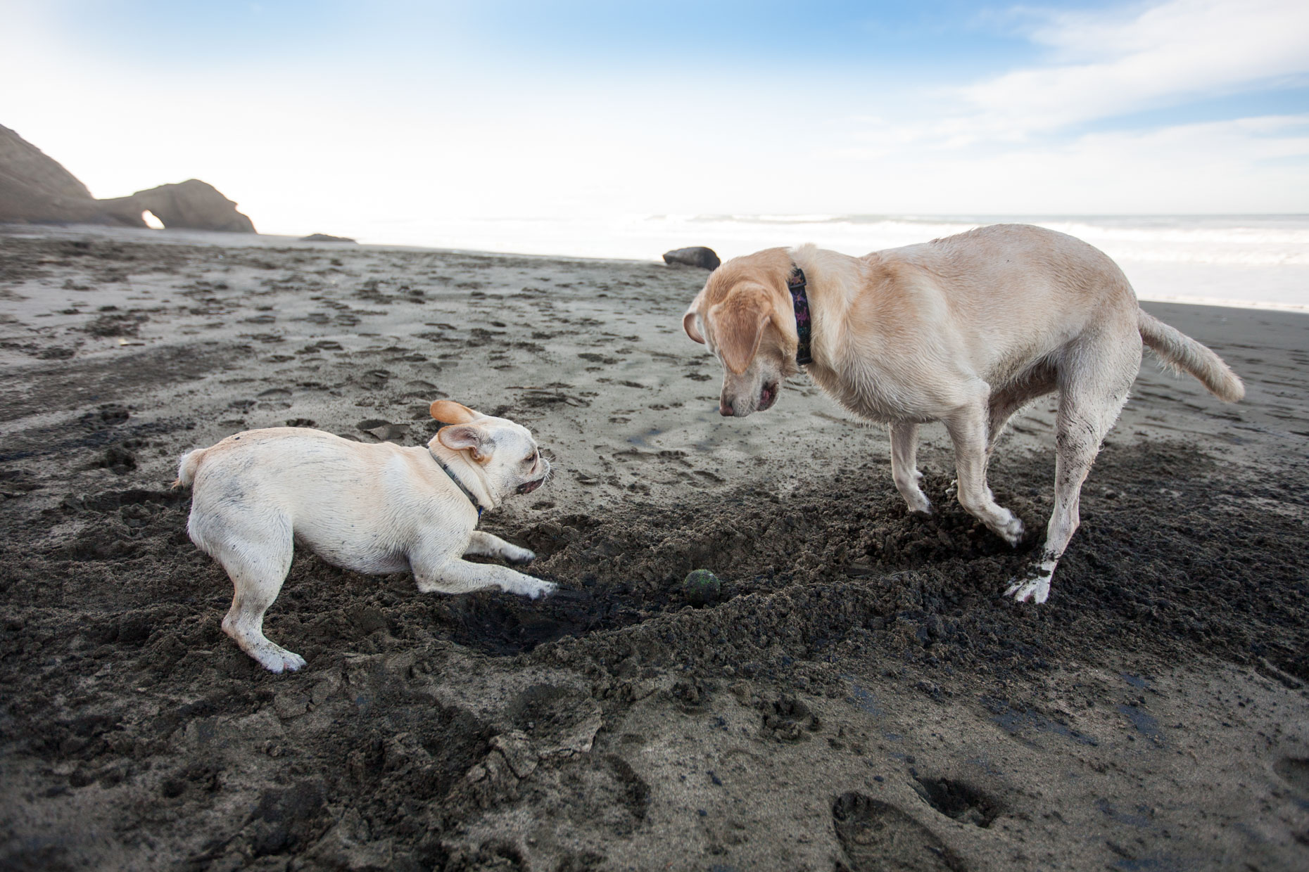 Dog Photography | Two Dogs Playing on Beach by Mark Rogers