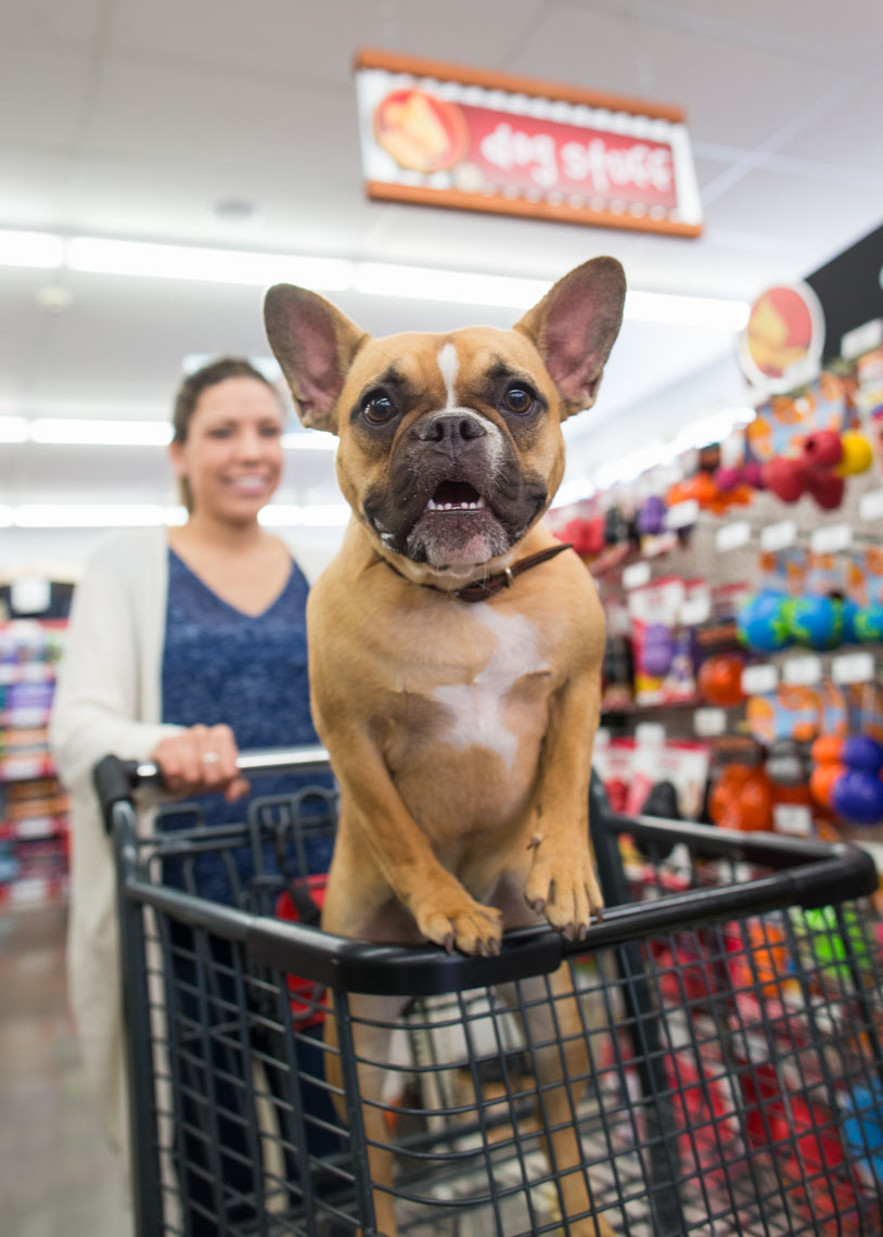 Pet Lifestyle Photography | Dog Shopping Cart by Mark Rogers